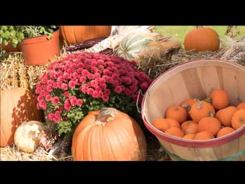 New England Fall Foliage Part 1: Caravan Tour