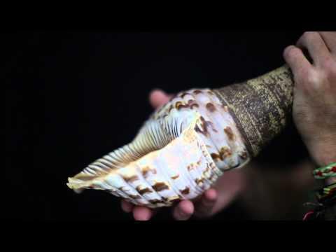 Rob Thorne WHAIA TE MARAMATANGA full length video