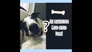 Are greyhounds good guard dogs?