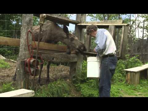 I Am A Wildlife Whisperer | INDIE ALASKA