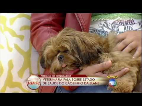 Canil vende cachorro doente e não se responsabiliza por tratamento #ArquivoPatrulha