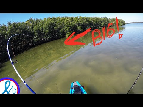 This one Hurts Snook Fishing Biscayne Bay Miami Bonafide Kayaks SS127 and Bixpy