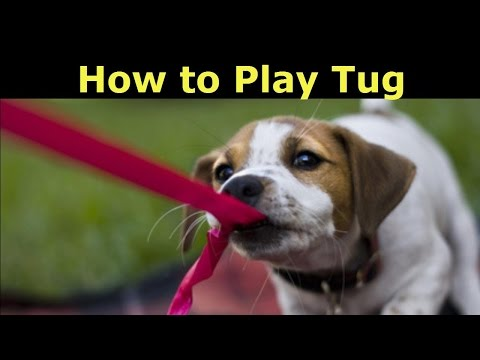 Best Way to Play Tug with Your Dog