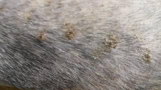 Аллергия у йорка, как она выглядит