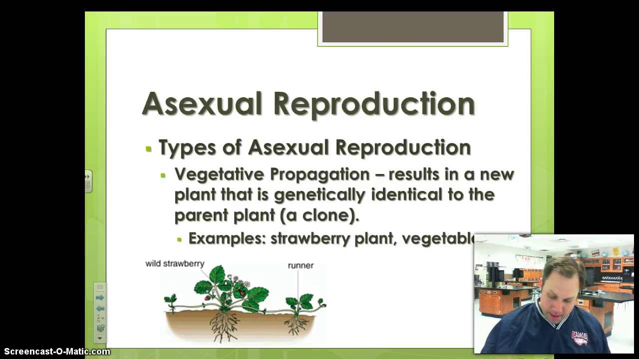 New term for asexual reproduction video