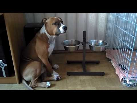 Объявления щенки, собаки. Породы собак