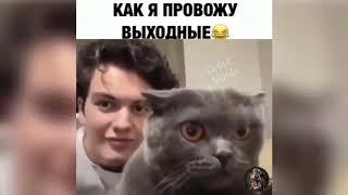 #10 Новые приколы с животными смешные до слез 2019...