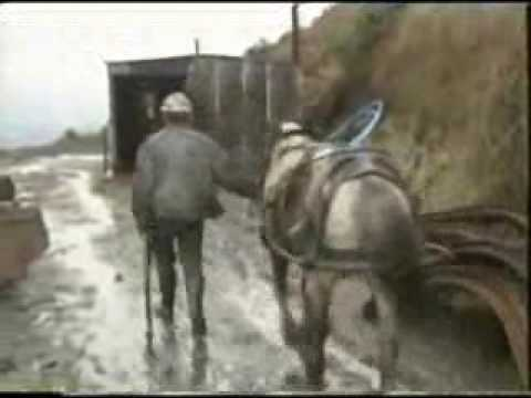 The last Welsh Pit Ponies V1.WMV