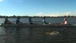 Hitting a swan.m4v