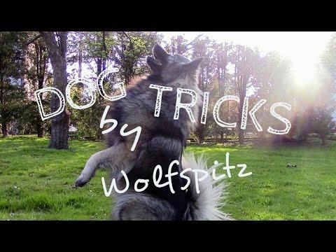 DOG TRICKS by Wolfspitz