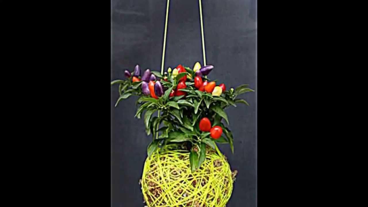 Pflanzgefase aus moos  pflanzgefäße aus moos und faden dekorieren haus und garten ...