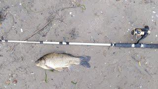 Летняя рыбалка на реке Аксай 2020 Открытие летнего сезона рыбалки 2020 Ловля карася на фидер