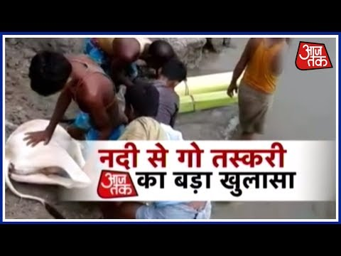 Exclusive: Cow Smugglers In Assam Get Exposed