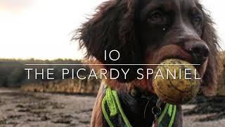 Io: The Picardy Spaniel