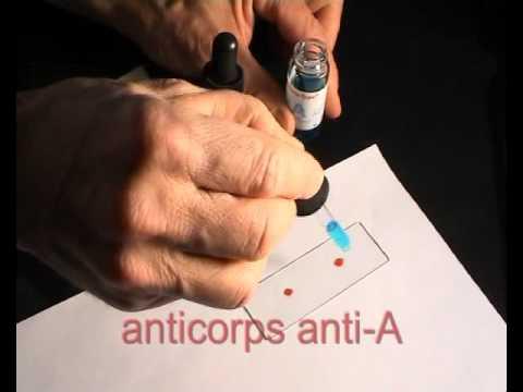 Groupes Sanguins O A B Ab Définition Et Compatibilité