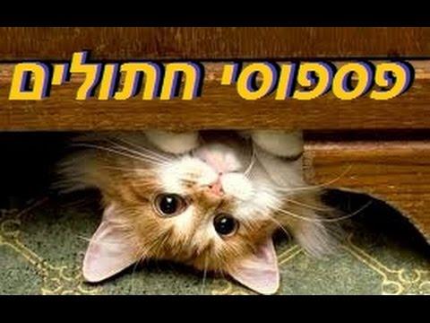 פספוסים ונפילות מצחיקות של חתולים - מקבץ פספוסי חתולים 2015