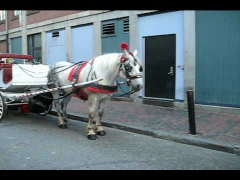 horse drawn carriages in  Boston filmed by Twombly Publishing