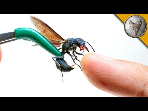 Thumbnail: STUNG by a WARRIOR WASP!