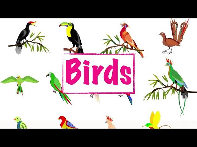 Bird Names || Pre-school Learning Video || English Educational Video ||Learn Bird Names ||Birds List