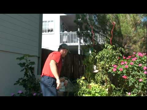 Spider mite control in the garden how to