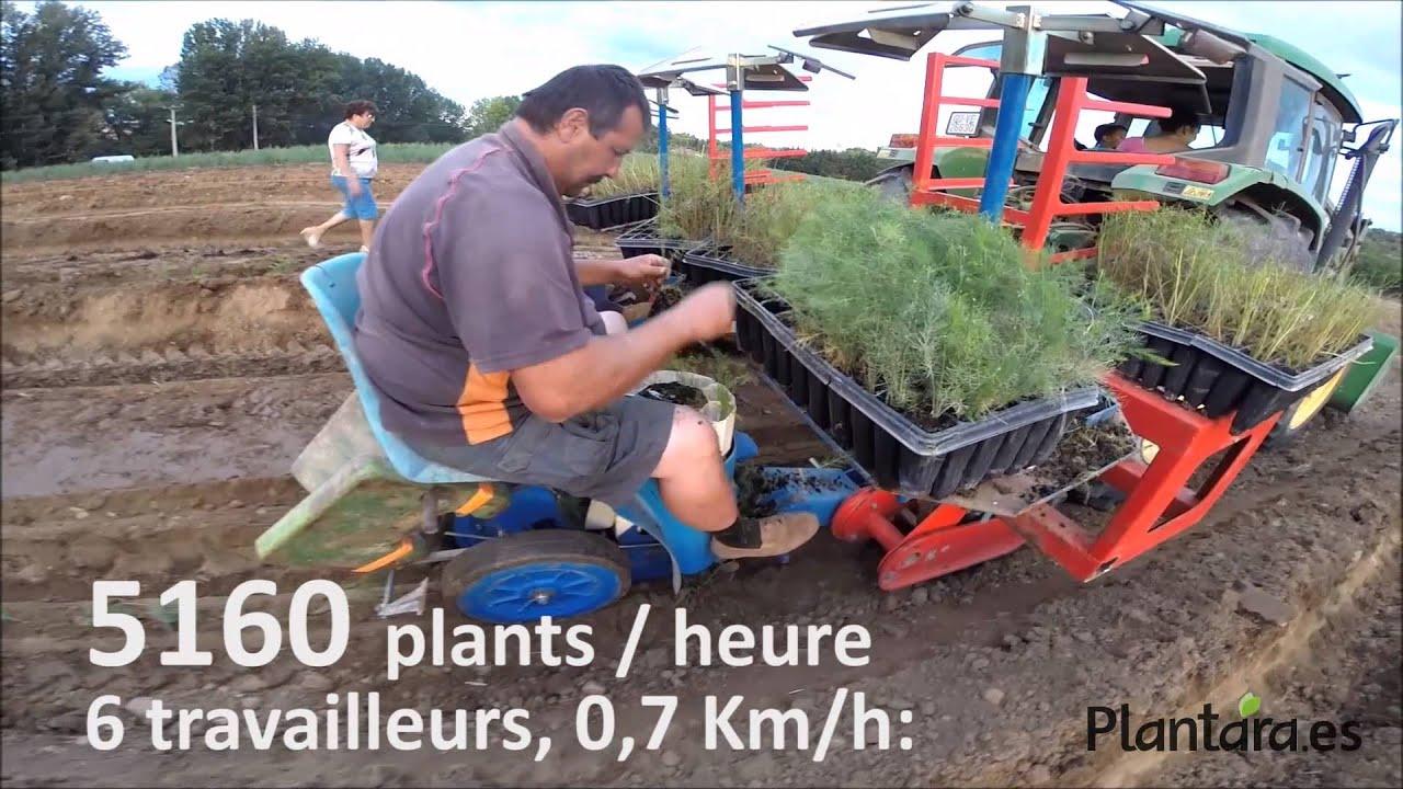 Comment Planter Des Asperges plants d'asperge en motte plantation automatique ferrari fmaxplantara  pepiniere