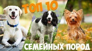 ТОП 10 собак  компаньонов для семьи