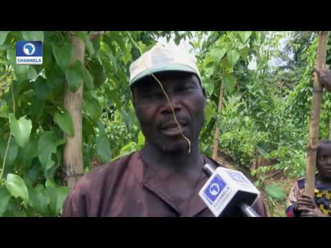 Eco@AFrica: Nigeria Farmers Radio In Focus 21/08/2016