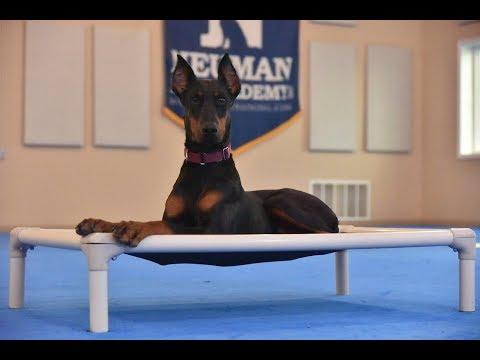 Freyja (Doberman Pinscher) Boot Camp Dog Training Video Demonstration