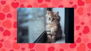 Картинки котиков и котят