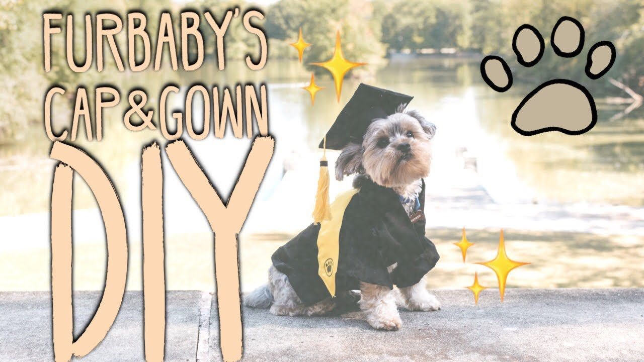 Graduation Edition Diy Furbabys Cap Gown Youtube