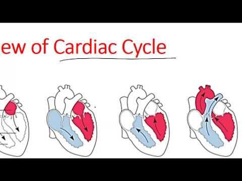 Cardiac Cycle Of Heart Youtube