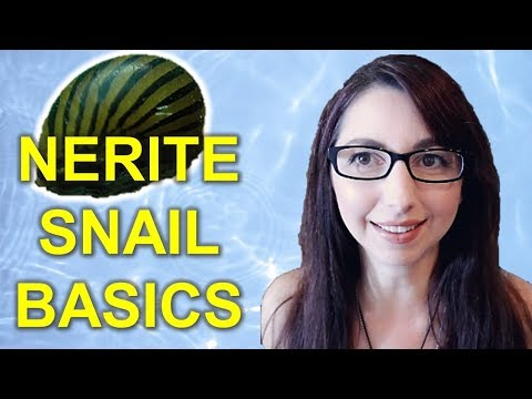 Nerite Snail Care Guide | How To Care For Nerite Snails