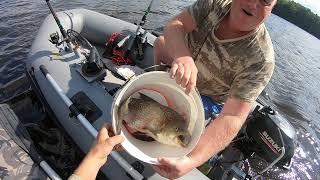 Рыба Жерех на Даугаве Latvija