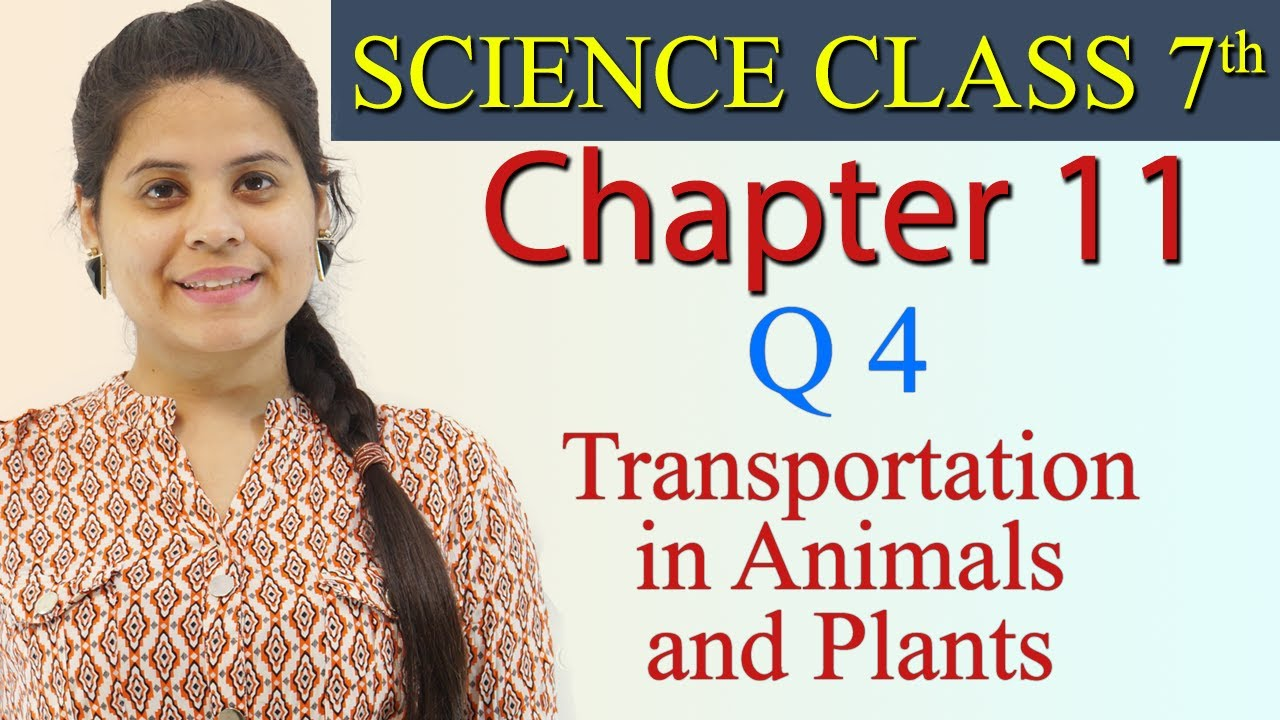 Q 4 :- Chapter 11 - Transportation in Animals and Plants ...