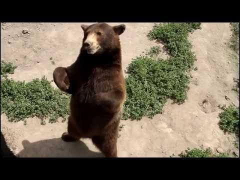 Bear World Idaho * Yellowstone Bear World * Bear World in Idaho