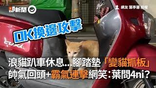 浪貓趴機車休息...腳踏墊秒變貓抓板  帥氣回頭+霸氣連擊|寵物|貓|浪浪