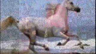 VIDEO CABALLO RUCIO BLANQUITO_0001.wmv