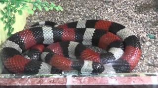 Зоопарк - террариум: Ядовитые змеи, пауки, рыбки, огромные черепахи. Супер отдых!