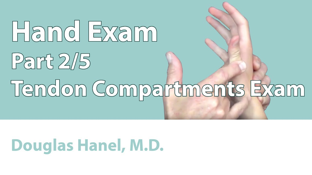 Hand Exam Part 02 Tendon Compartments Exam Youtube