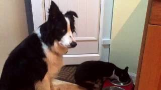 「すみません、ボクにも少しくださいな…」猫にご飯を取られちゃった犬