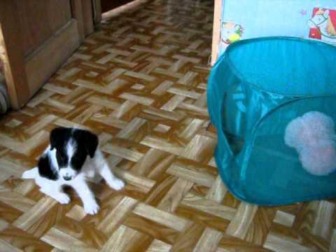 Купля-продажа щенков охотничьих собак