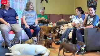 Old Friends Senior Dog Sanctuary #OFSDS Chat 09.01.17