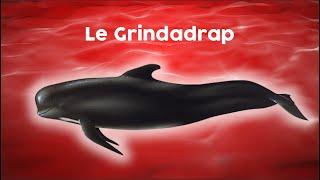 Ils massacrent des globicéphales aux îles Féroé - PLANÈTE ASSISTANCE