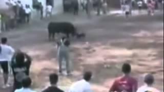 Phim | Những trận chiến của động vật hoang dã. 2.FLV | Nhung tran chien cua dong vat hoang da. 2.FLV