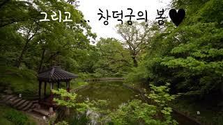 창덕궁 후원 그리고 만첩홍매화