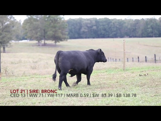 Edgewood Angus Lot 16