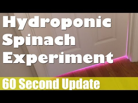 60s Update - IS IT WORKING?! The DIY DWC Hydroponic Spinach Project