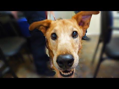 Skinny Shelter Dog Gets First ...