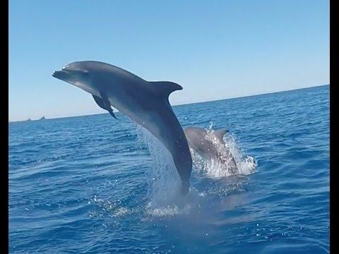 Dolphins Ibiza
