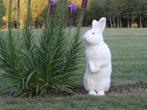 Кролики все о разведение кроликов, кролиководство